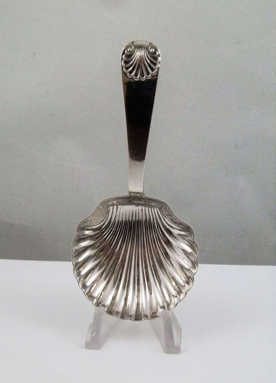 Edwardian silver shell bowl caddy spoon, Sheffield 1903